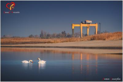 Белые лебеди, дикие лебеди. Снова вернутся в родные края.  Белые лебеди, дикие лебеди.  Жизнь чем-то схожая с ними, моя!