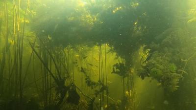 Джунгли Волга подводная охота под водой