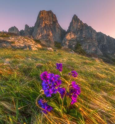 Цветы и скалы горы Цей-Лоам Северный кавказ ингушетия цей-лоам цветы расмвет весна