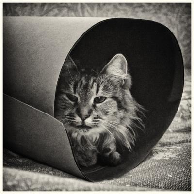 *** кошка животные черно белое фото zoo