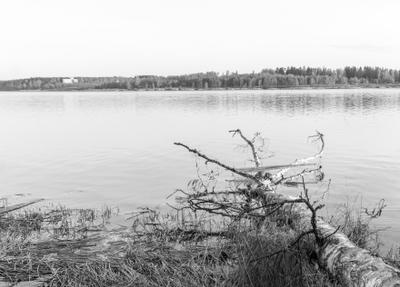 Изобретательность рыбаков... Озеро дерево рыбалка