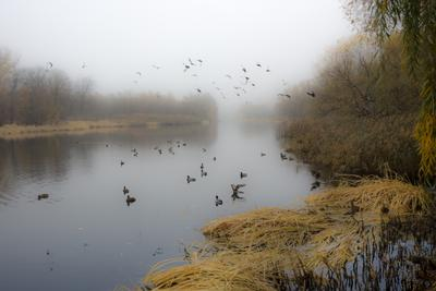 В утреннем тумане река туман осень утки птицы