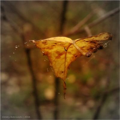 осенняя  лист осень