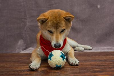 Ухты, шарик собаки Япония сиба-ину самурай шиба праздник шар украшение