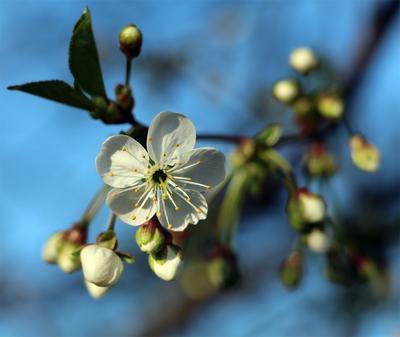 Щупальца! цветок щупальца очынь страшна