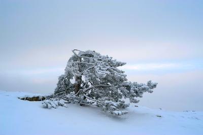 холодно... Крым, зима, снег, холод