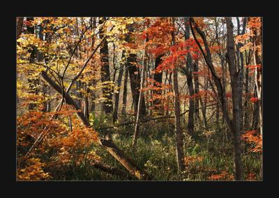 *** лес осень приморский край Владивосток