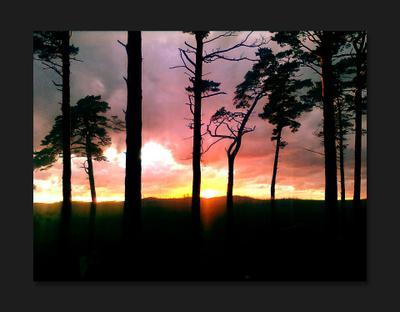 Танцующие деревья Деревья ветки природа небо солнце силуэт цвета