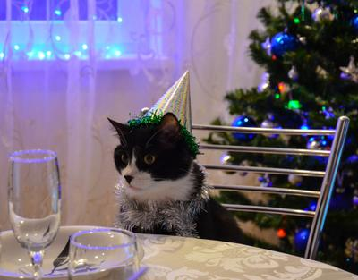 Не налили. кот новый год