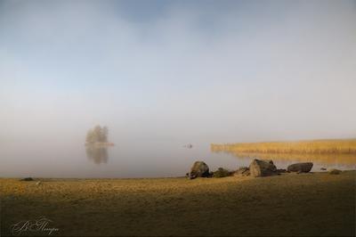 Немного солнца в утреннем тумане Туман камни камыш островок