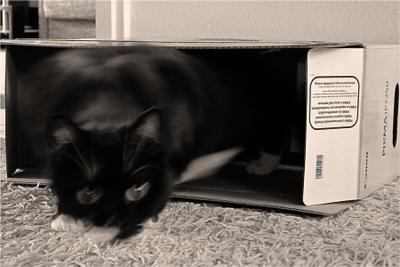 PIXMA IP7250 кот охота игра коробка canon