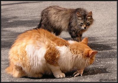 Васька...чё, вкусно?! коты кошки