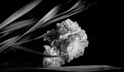 Цветок для съемки совсем не типичный... Он самый простой.. невзрачный. обычный... Лохмато-не чесанность в нем ощущая...... Я именно им... себя поздравляю...   НАРОЖДЕНИЕ НАДИ К