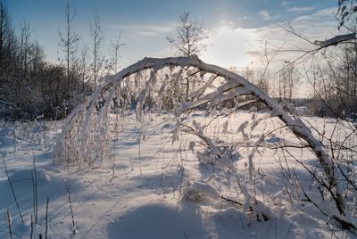 В низком поклоне встречает зима снег деревья солнце тени
