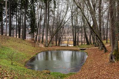 Тригорское. Осенний парк. Пушкинские горы. Тригорское Пушкинские горы осень ноябрь парк