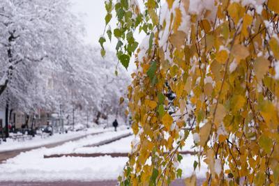 *** зима листики