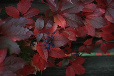 яркие краски осени листья осень ягоды