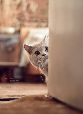 вы думаете вы со мной играете? это Я с вами играю!!!