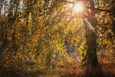 *** природа пейзаж осень татарстан урняк береза
