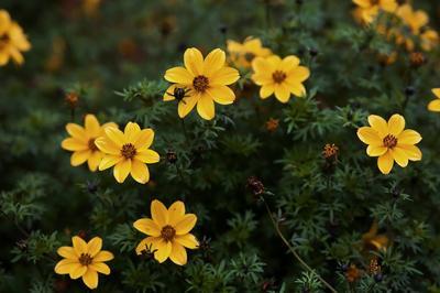 *** цветы цветок цветочки кусты осень желтый зеленый