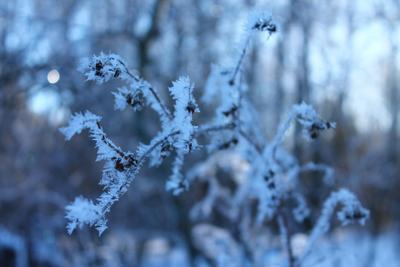 Кружева снег зима