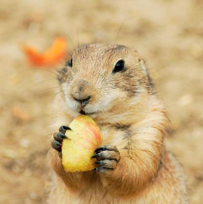 С яблочком.