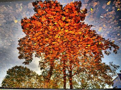 *** осень дерево листья перевертыш