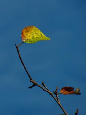 Палитра осени в одном листе осень лист