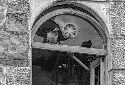 Голубь в окне птицы окна голубь