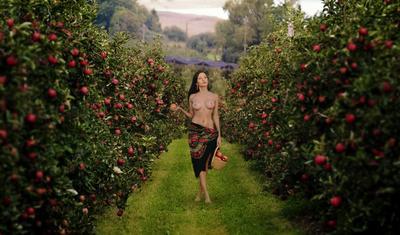 Яблоки девушка яблоки сад брюнетка ню топлесс модель поза арт