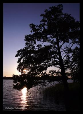 Тракай тракай, литва, озеро, закат, сосна, солнце, вечер