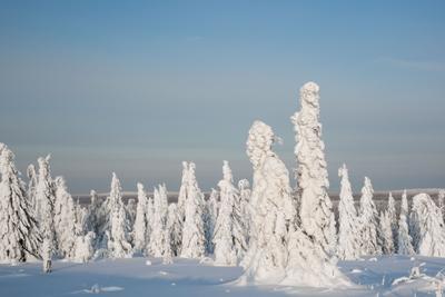 Причуды матушки зимы*** зима снег тайга