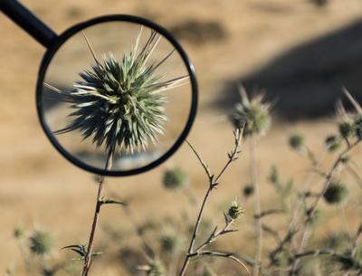 Колючка в лупе природа цветок колючка лупа линза