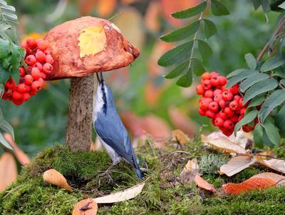 Грибник природа птицы фотоохота поползень