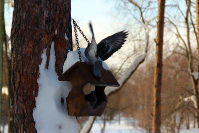 Обед голуби кормушка