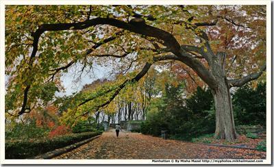 """""""Страж"""" времени в Форт Трайон Парке Нью-Йорк парк Клойстерс Форт Трайон Парк вековой дуб вяз дерево"""