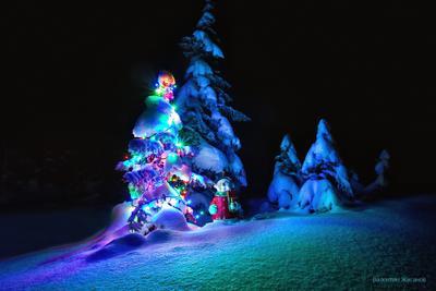С Рождеством! рождество елка новый год подарки снеговик