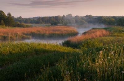 Изгибы пейзаж рассвет река туман деревья одуванчики