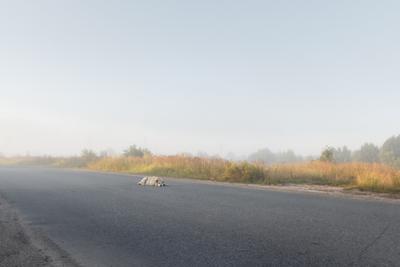 Одинокая собака на дороге собака на дороге одинокая