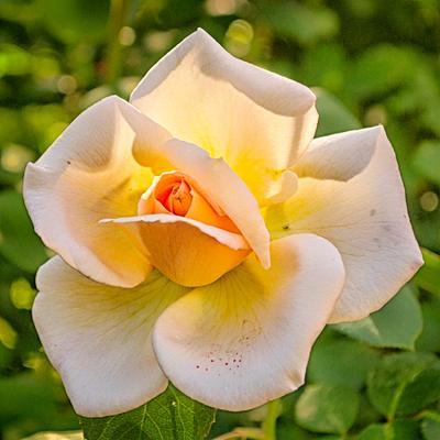 *** Цветы макро флора