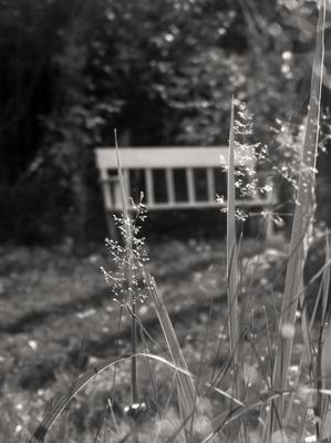 *** скамейка лавка трава макро