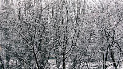 Фракталы первого снега. Сквер деревья первый снег фракталы