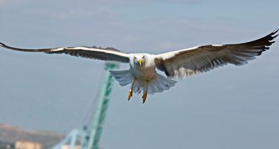 ...прошу посадку разрешить...*** полет чайки приморье красота