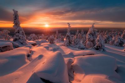 День угасает так быстро зима снег елка вечер закат небо солнце финляндия