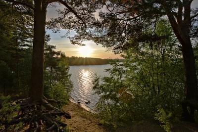Рассвет озеро пейзаж рассвет ленобласть