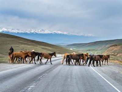 Дорога к Тянь Шань в Киргизии. киргизия горы снег снежники тянь шань пейзаж лошади