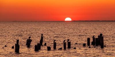 На закате дня море солнце закат бакланы