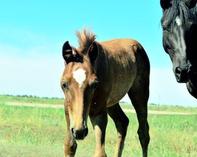 Любопытство животные лошади