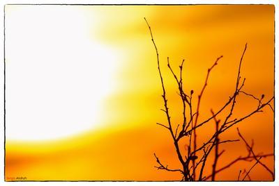 Tranquility... Байдарская долина, Крым, Закат, Осень, Ветка, Солнце