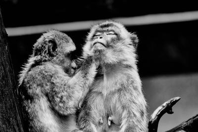 Забота животные